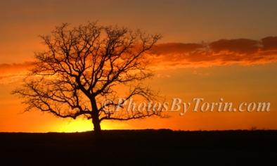 Bare Tree Sunset